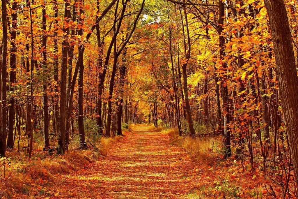 Las hojas cambian de color en otoño por esta razón.