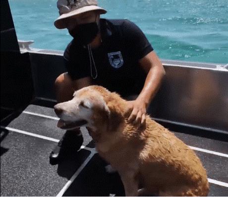 ¡Héroes sin capa! Rescatan a perrita que se ahogaba en el mar de Yucatán